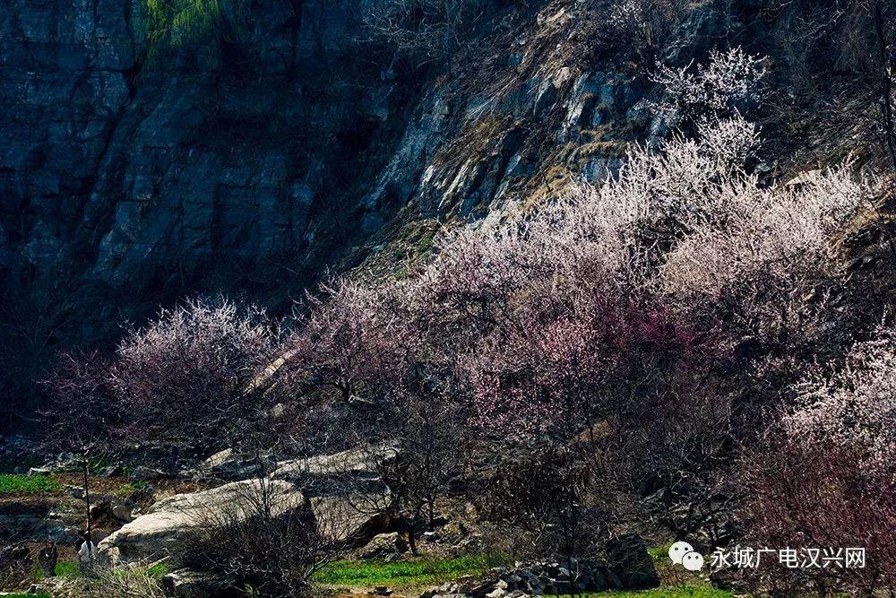 【花开迎两会】万亩花开待客来,永城的春天竟然这么美! 自媒体