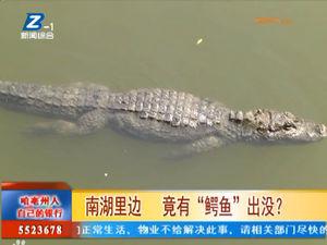 """南湖里边 竟有""""鳄鱼""""出没? 自媒体"""