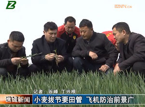 小麦拔节要田管 飞机防治前景广 自媒体