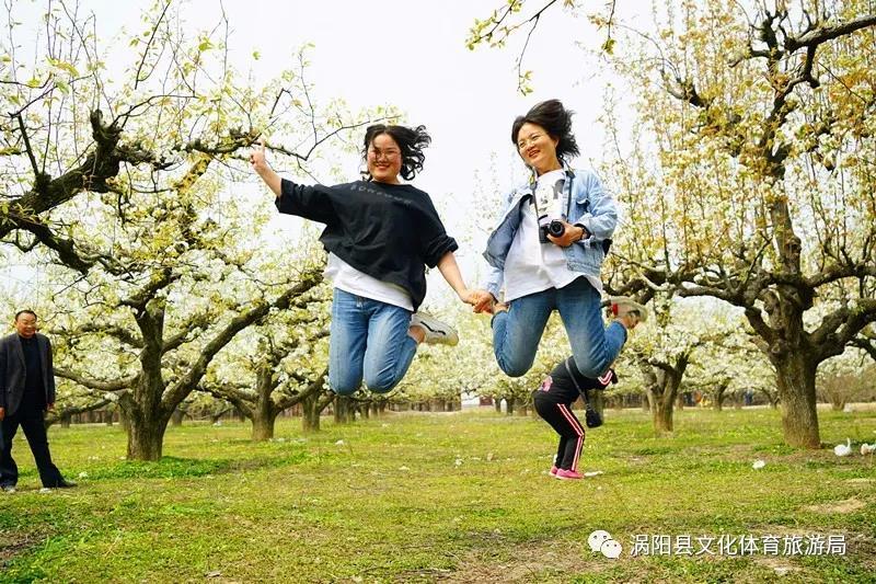 春游江淮请你来--涡阳首届梨花节盛大开幕 自媒体
