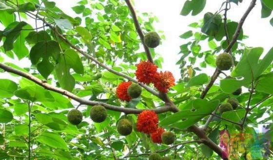 这款长在树上的春季限量美食,你今年吃了吗? 自媒体