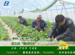 """蒙城县三义镇三塔村:邵文的""""草莓时光""""! 自媒体"""
