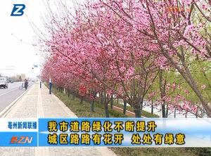 亳州市道路绿化不断提升 城区路路有花开 处处有绿意 自媒体