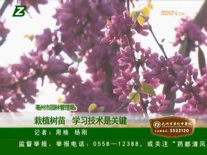 亳州市园林管理局:栽植树苗 学习技术是关键