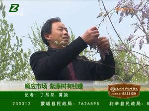 顺应市场 紫藤树有钱赚 自媒体