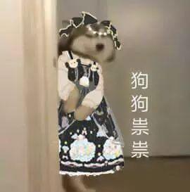 抖音狗狗祟祟带字表情包有哪些 抖音狗狗祟祟带字表情包介绍推荐 软件教程