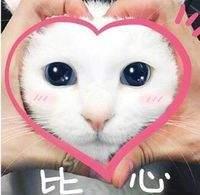 猫咪比心动图表情包大全 猫拿荧光棒gif表情包动图 软件教程